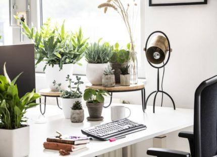 Intratuin: Het Groene (Thuis)Werken